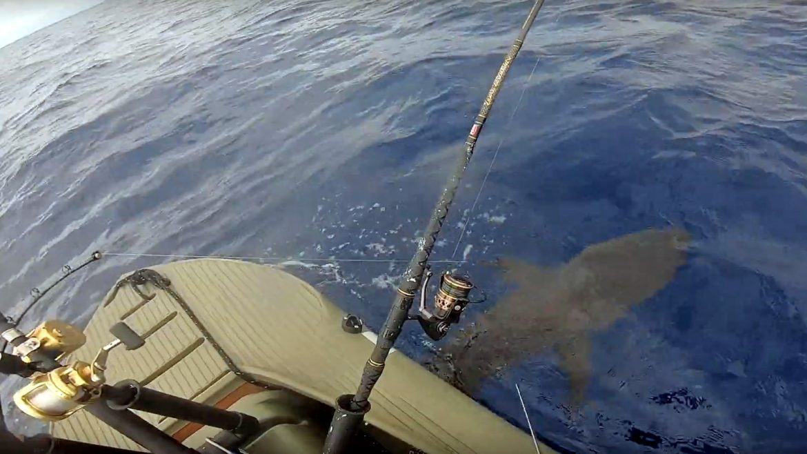 shark fishing offshore - Wavewalk S4 motor kayak skiff