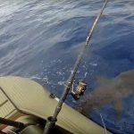 shark fishing offshore - Wavewalk S4 motor kayak skiff